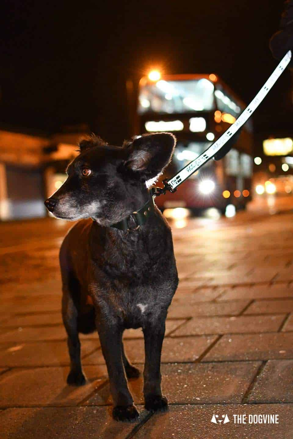 Dog Road Safety | How Safe Are You On London's Roads 24