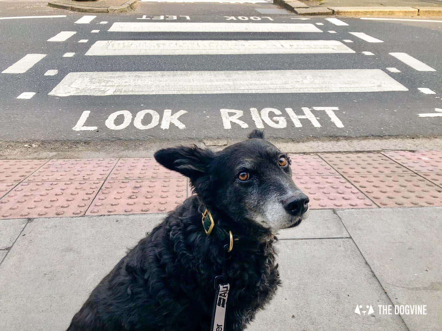 Dog Road Safety | How Safe Are You On London's Roads 29