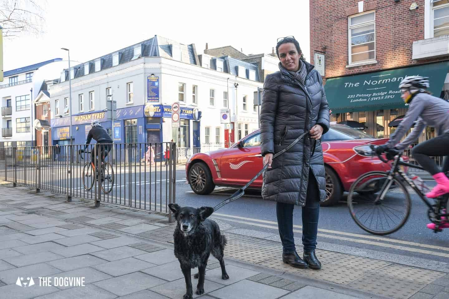 Dog Road Safety | How Safe Are You On London's Roads 4