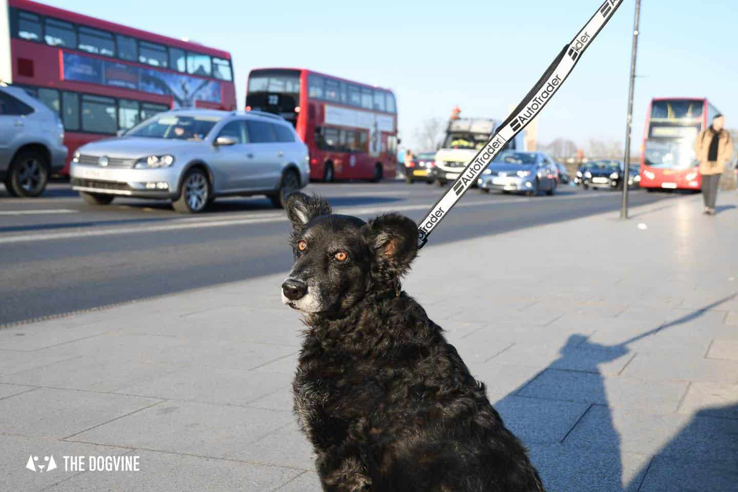 Dog Road Safety | How Safe Are You On London's Roads 8