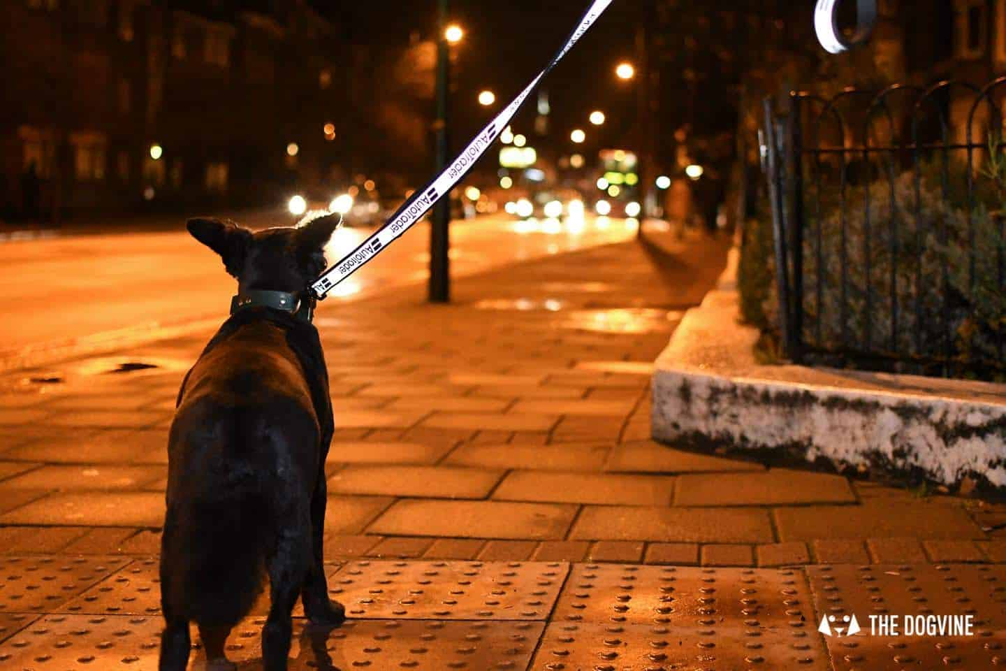 Dog Road Safety | How Safe Are You On London's Roads -Dog Walking