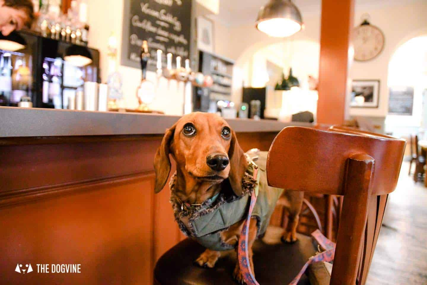 Dog-friendly Fulham | My Dog-friendly London By Empress Mathilda 3