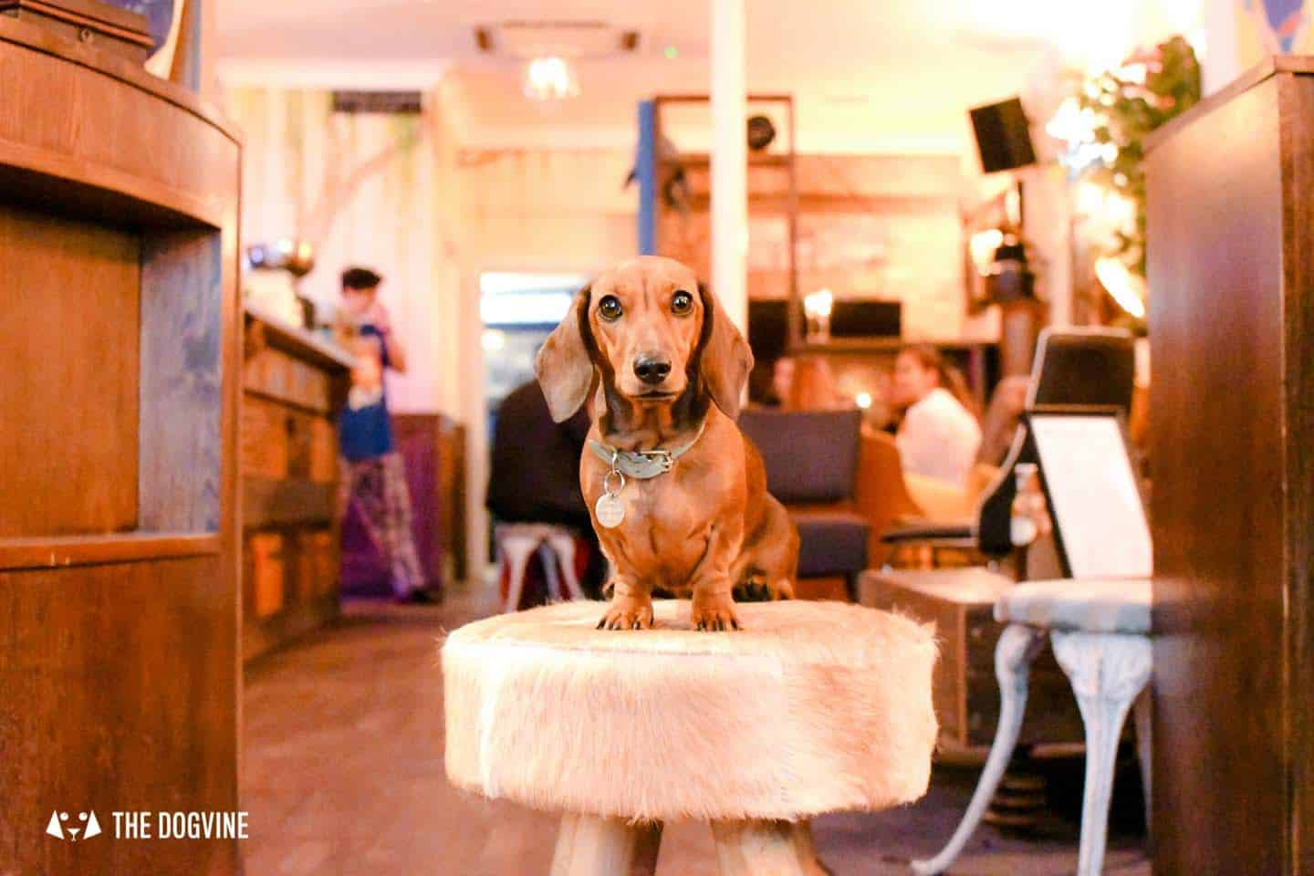 Dog-friendly Fulham - My Dog-friendly London - Empress Mathilda Sausage