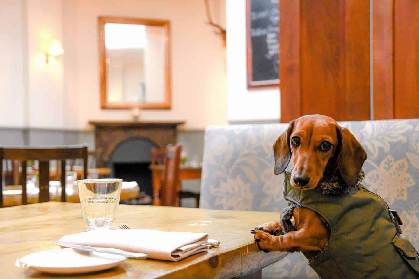 Dog-friendly Fulham - My Dog-friendly London - The Harwood Arms 3