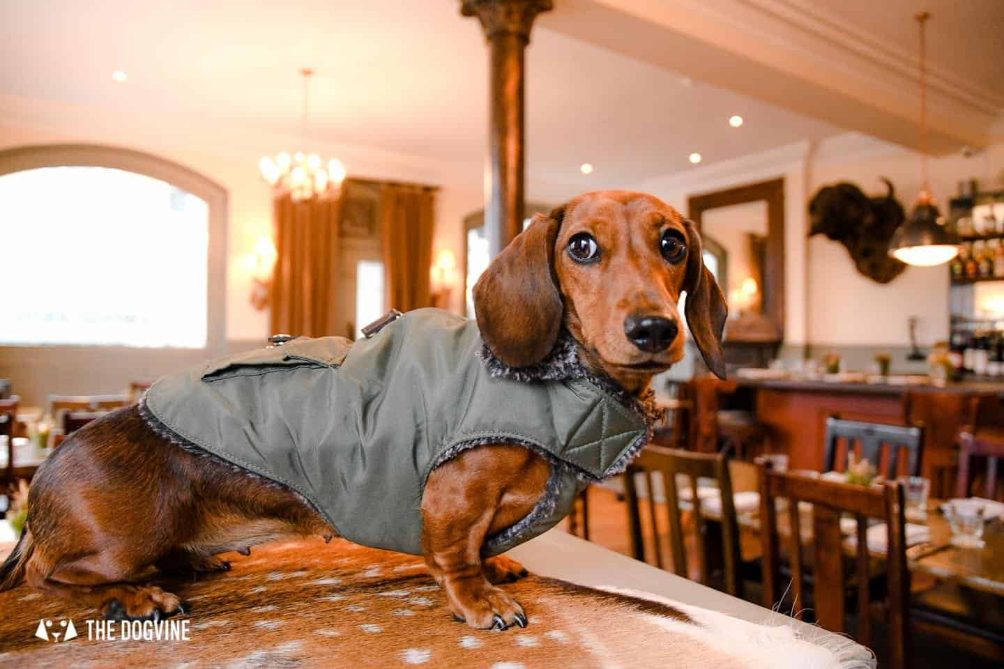 Dog-friendly Fulham - My Dog-friendly London - The Harwood Arms 5