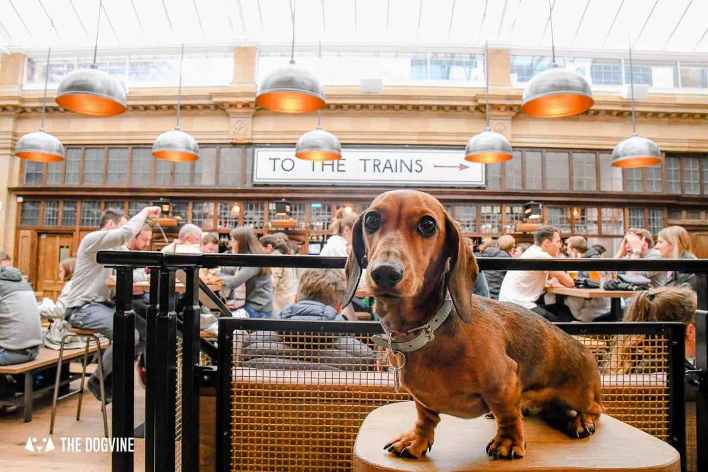 Dog-friendly Fulham - My Dog-friendly London - The Market Hall Fulham 3