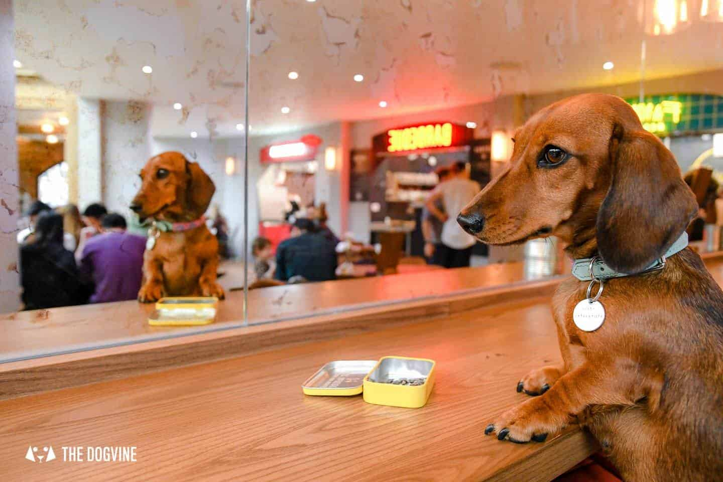 Dog-friendly Fulham - My Dog-friendly London - The Market Hall Fulham 4