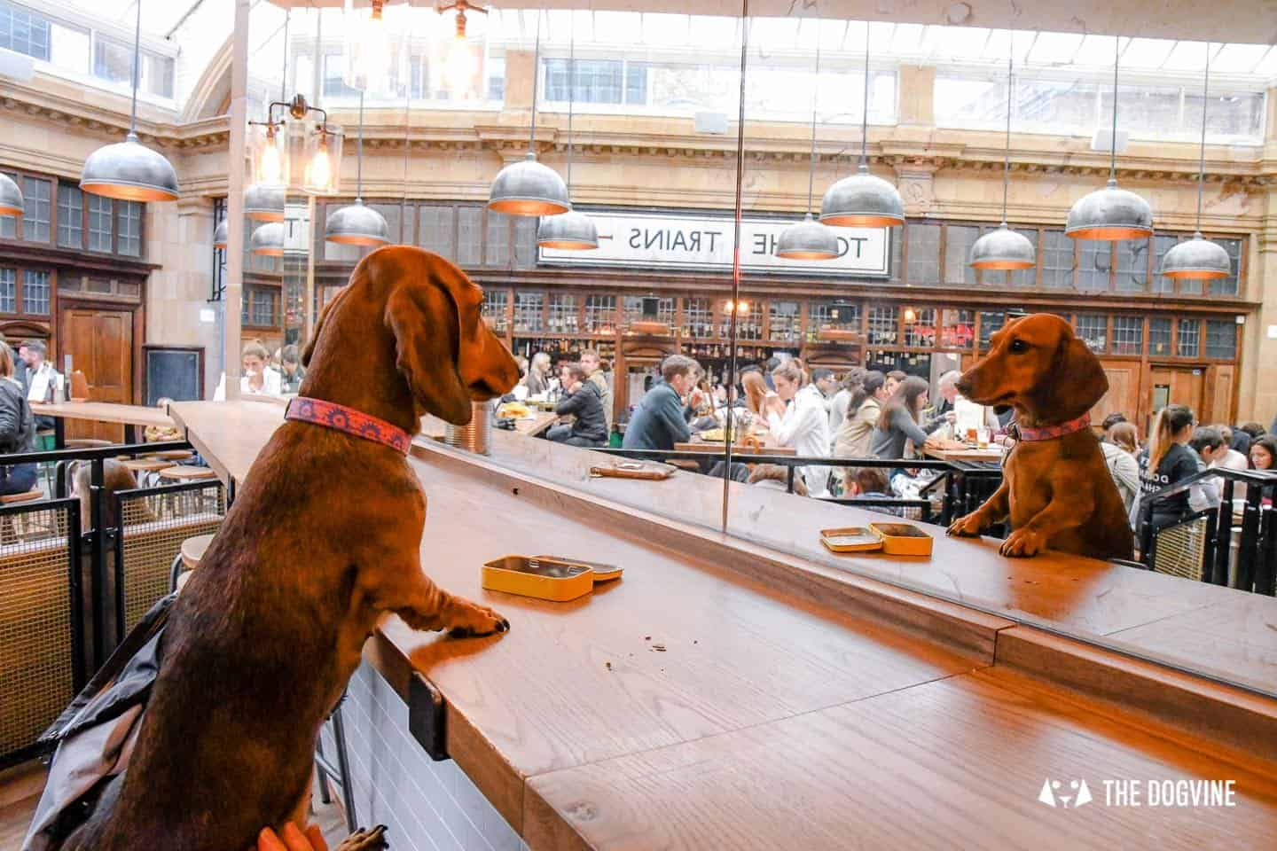 Dog-friendly Fulham - My Dog-friendly London - The Market Hall Fulham 5