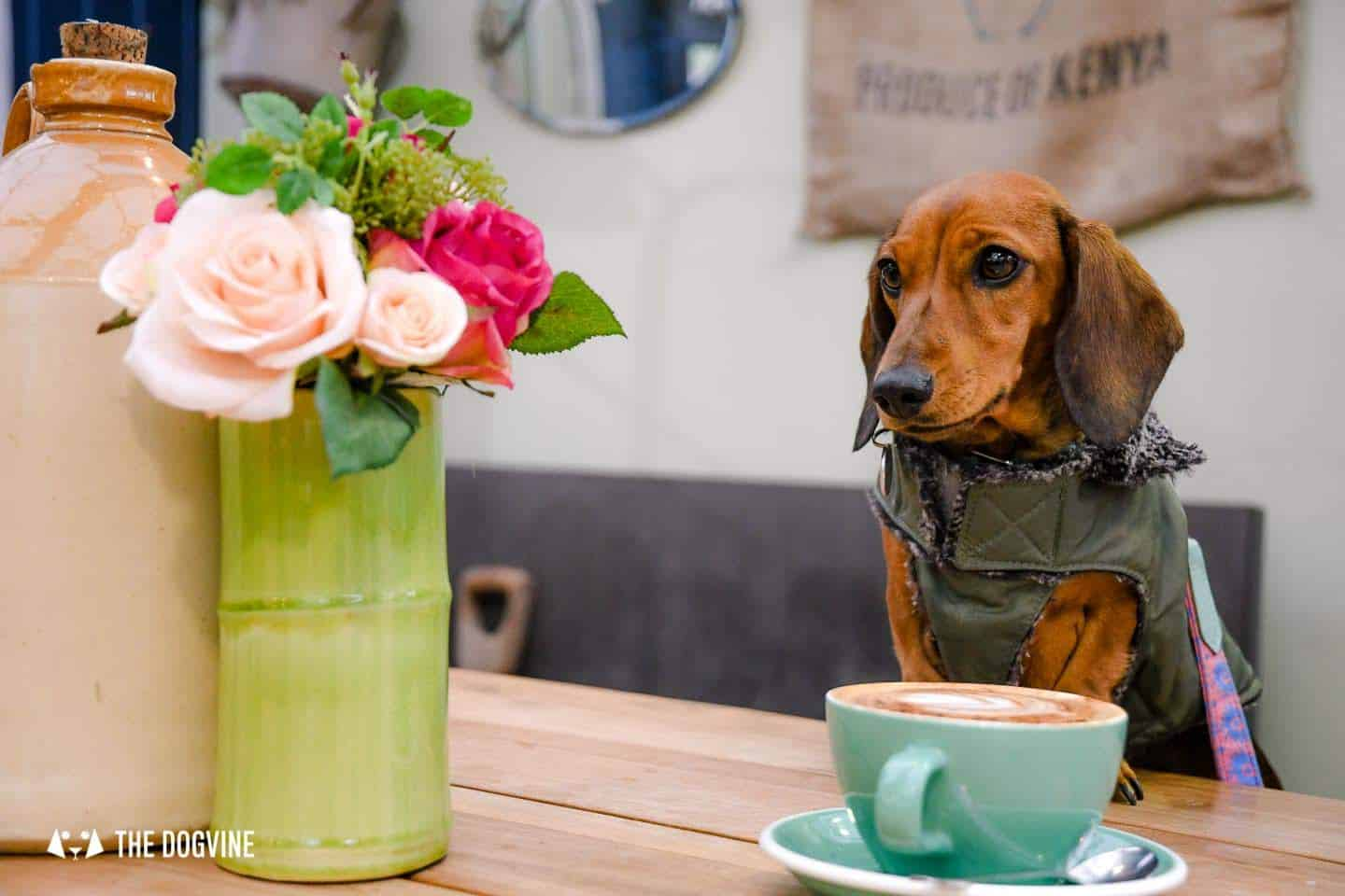 Dog-friendly Fulham - My Dog-friendly London - The Palace Gardener 1