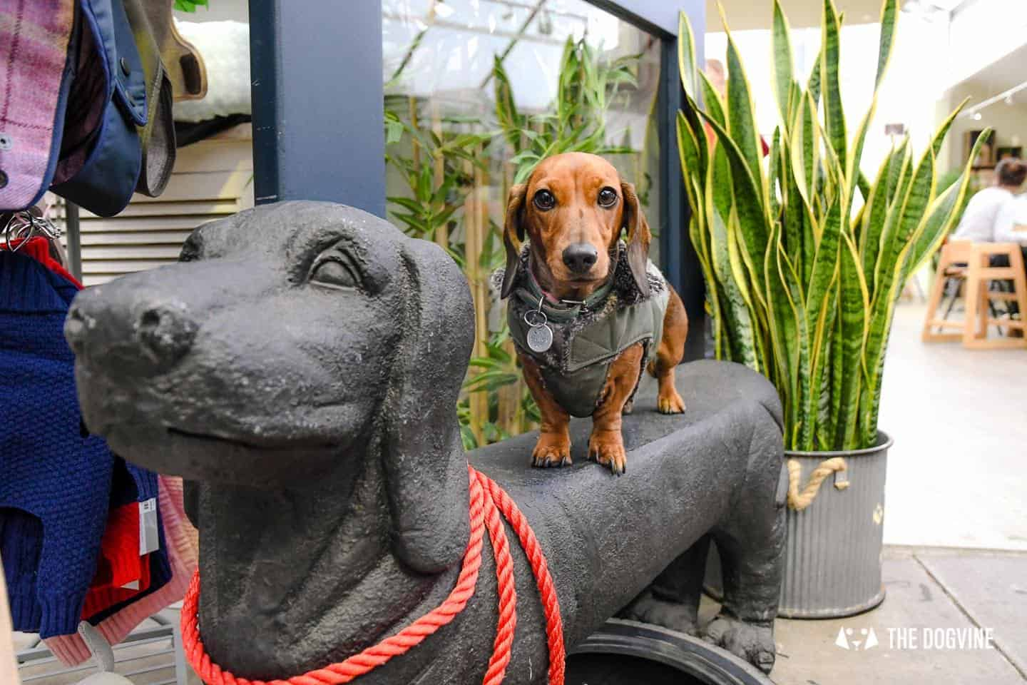 Dog-friendly Fulham - My Dog-friendly London - The Palace Gardener 6