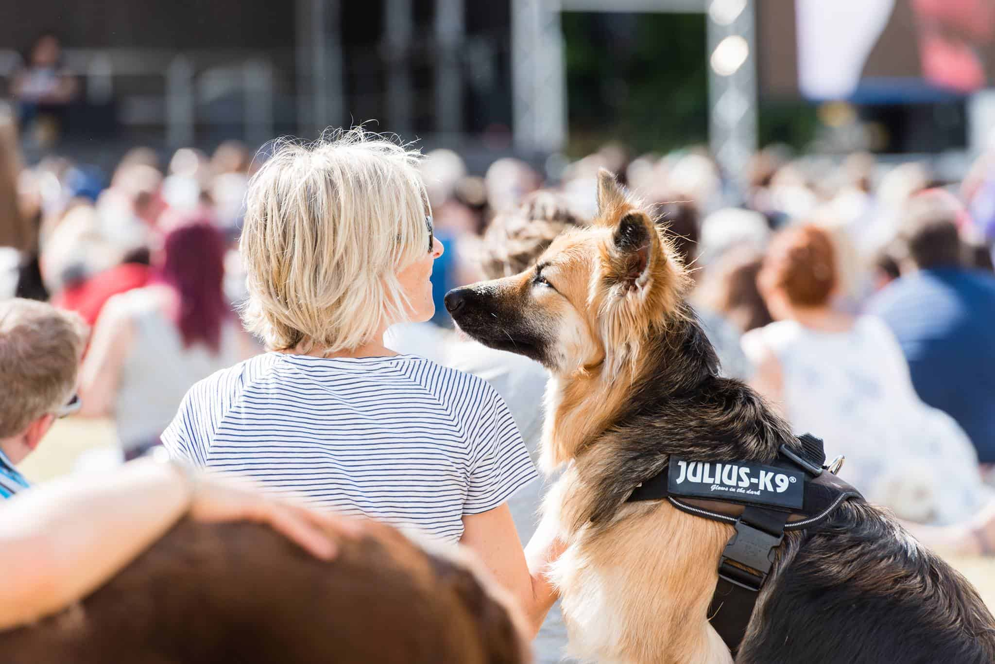 Dogfest South 2019
