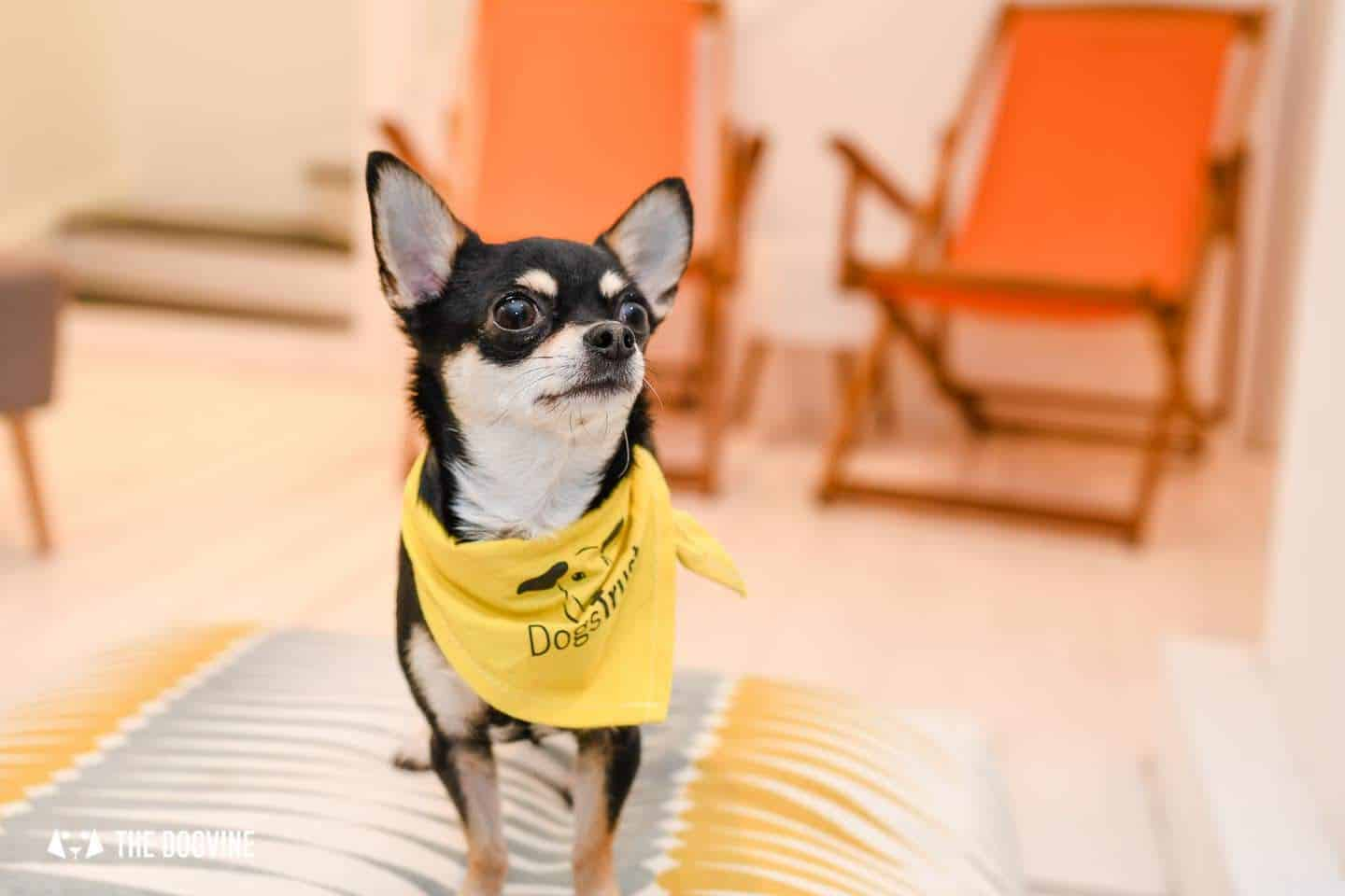 Dog's Way Home Takeover - Bella Dogs Trust Dog About Town