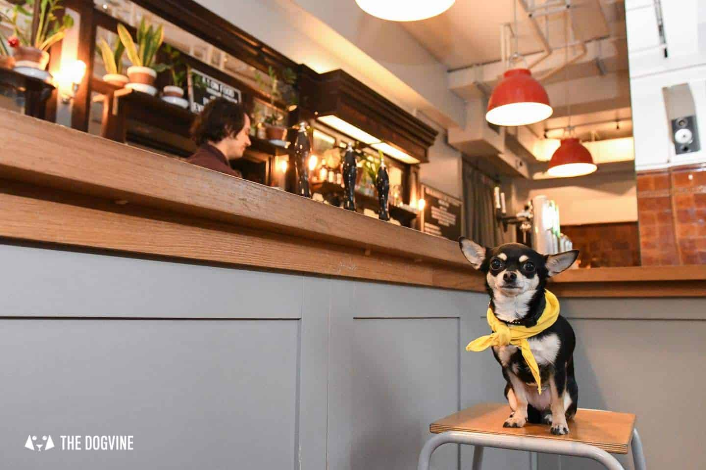 Dog's Way Home Takeover - The Blacksmith and The Toffeemaker Bella at the Bar