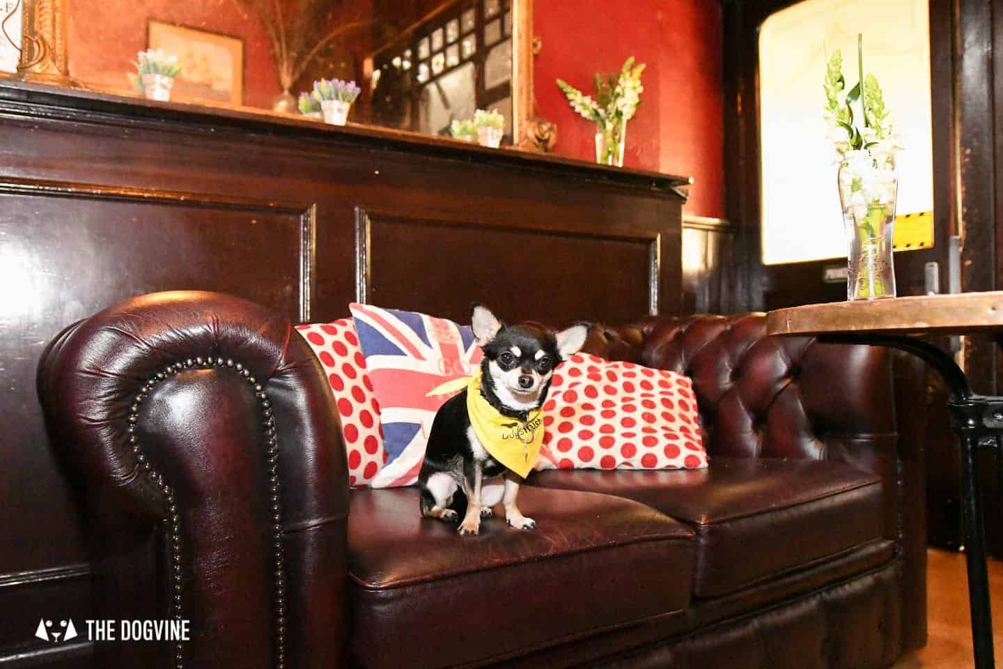 Dog's Way Home Takeover - The Island Queen Bella On Sofa