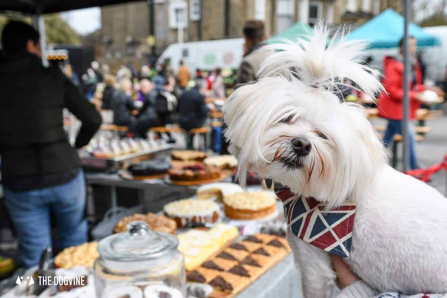 Guide To The Best Dog-friendly Street Food Markets and Halls in London - Brockley Market 2