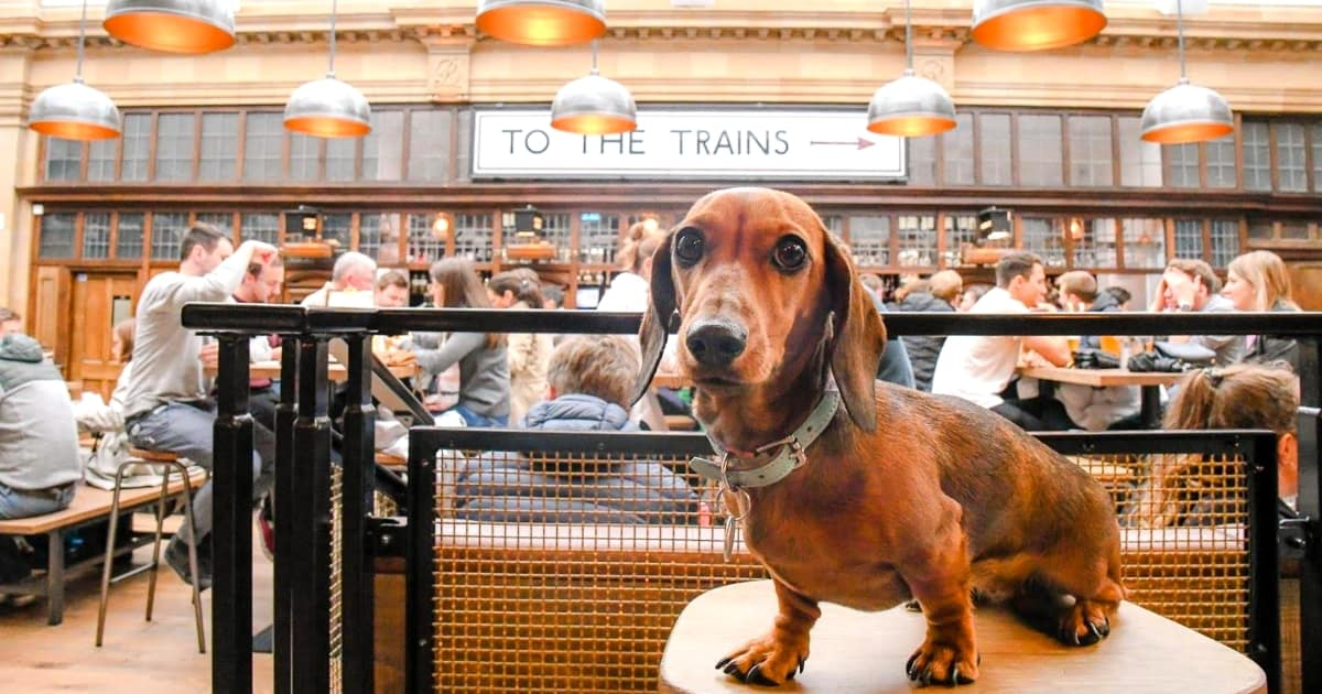 Guide To The Best Dog-friendly Street Food Markets and Halls in London