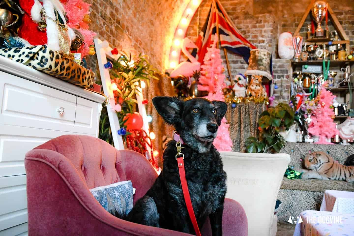 Living it Up Down Dog-friendly Little Nan's Deptford Market Yard 1