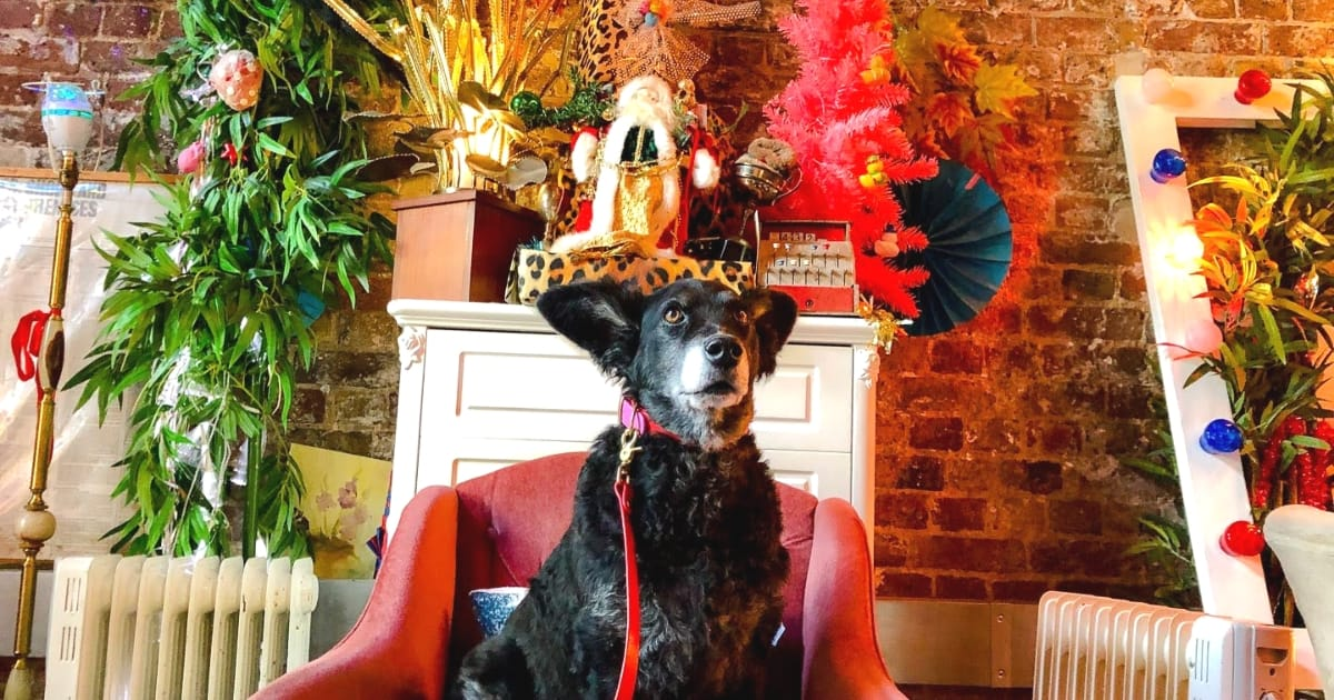 Living it Up Down Dog-friendly Little Nan's Deptford