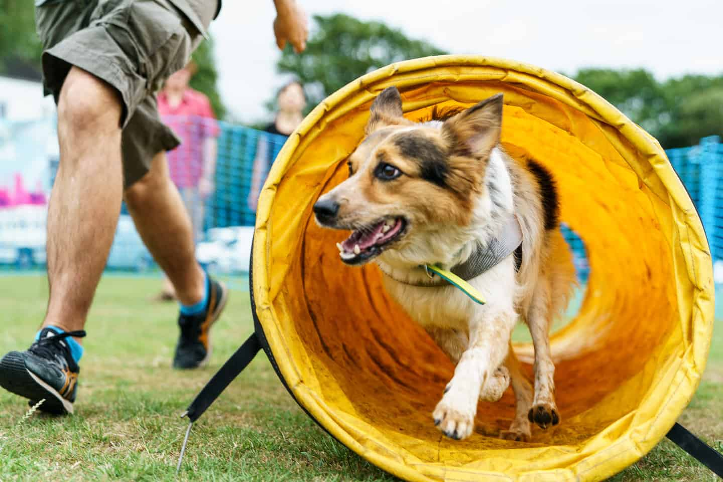 Mayhew Hounds On The Heath 2019 Event