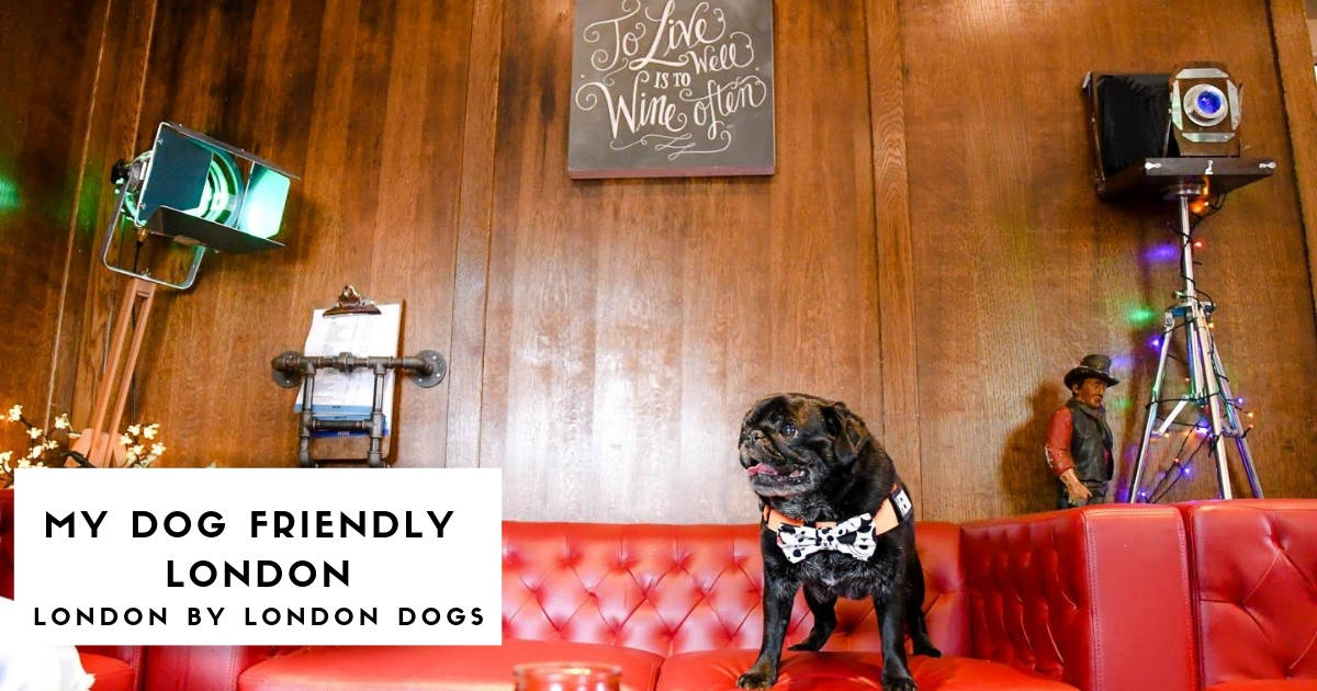 My Dog-Friendly London Features - Hemingway the Pug