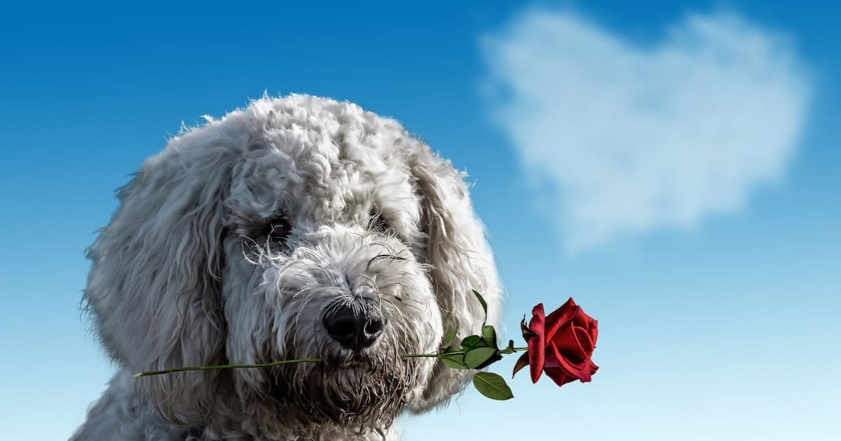 Valentines Pooches 'n' Pupcorn Dog-Friendly Cinema