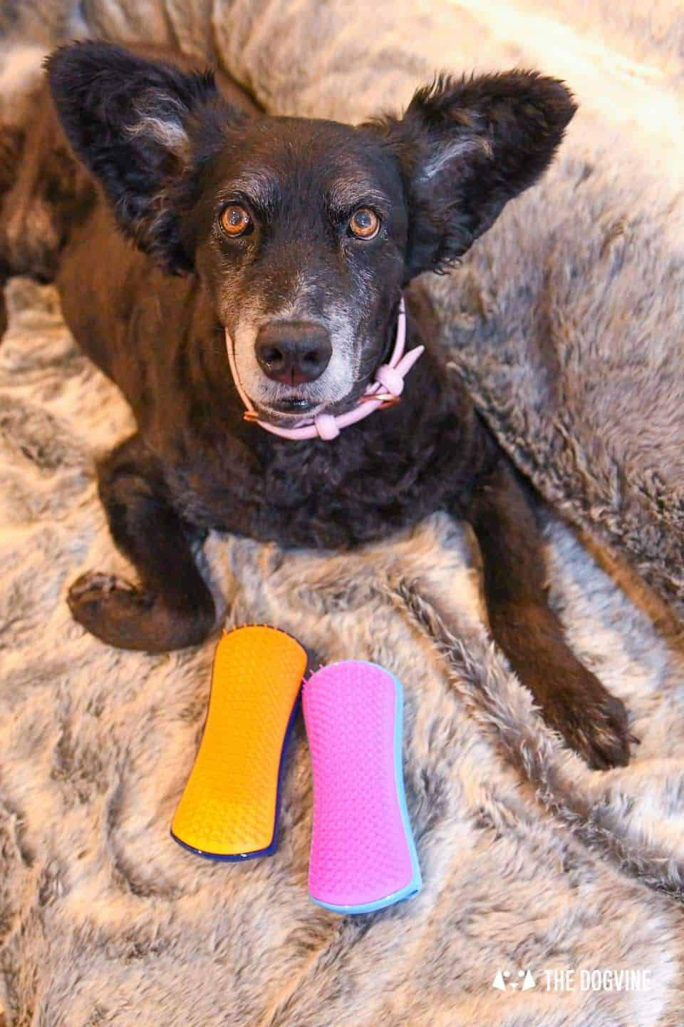 5 Ways to Bond With Your Dog This Love Your Pet Day - Pet Teezer 15