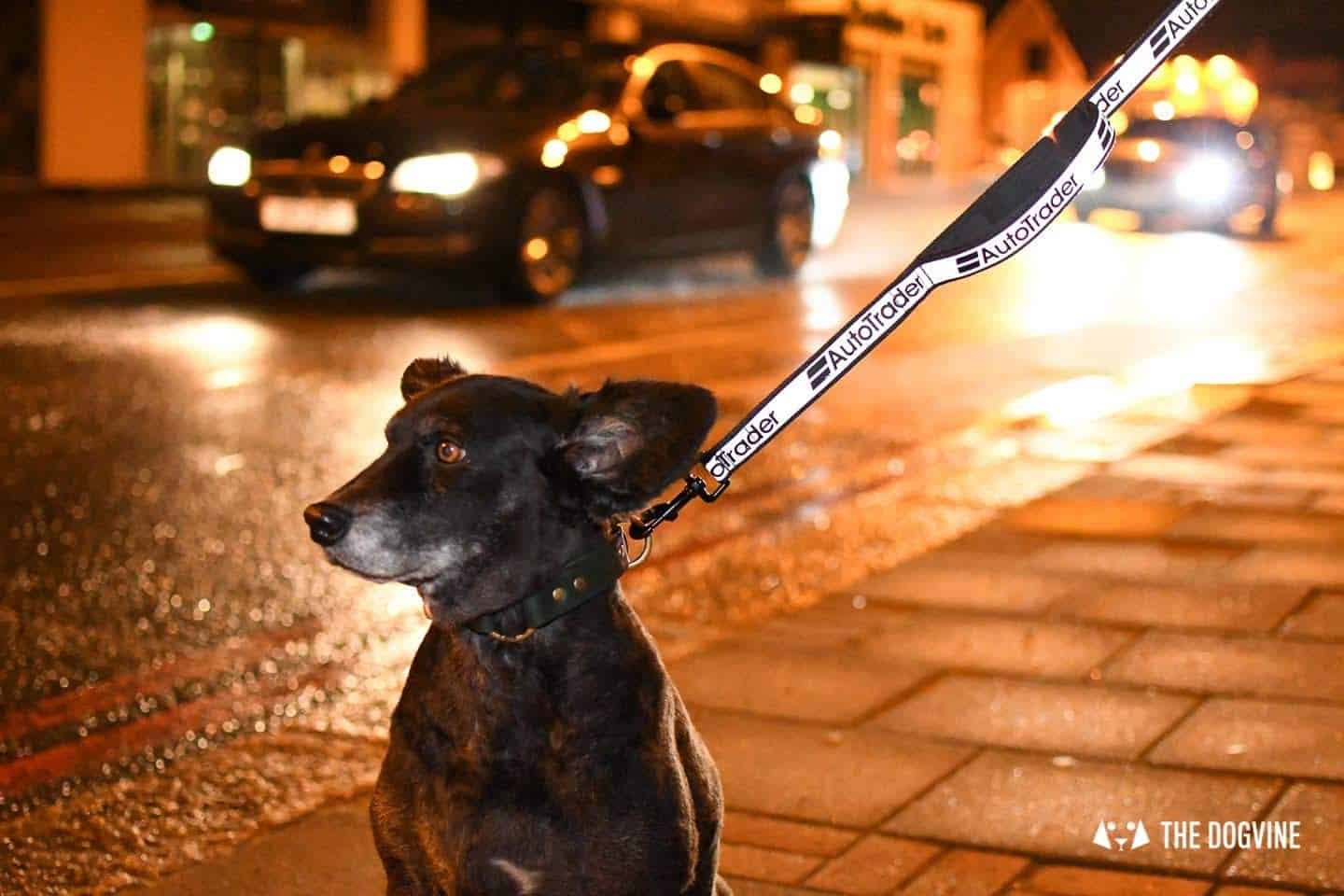 Dog Road Safety | How Safe Are You On London's Roads 32