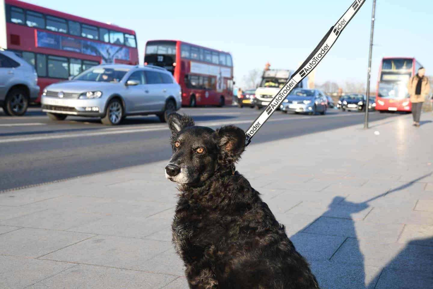 Dog Road Safety | How Safe Are You On London's Roads?