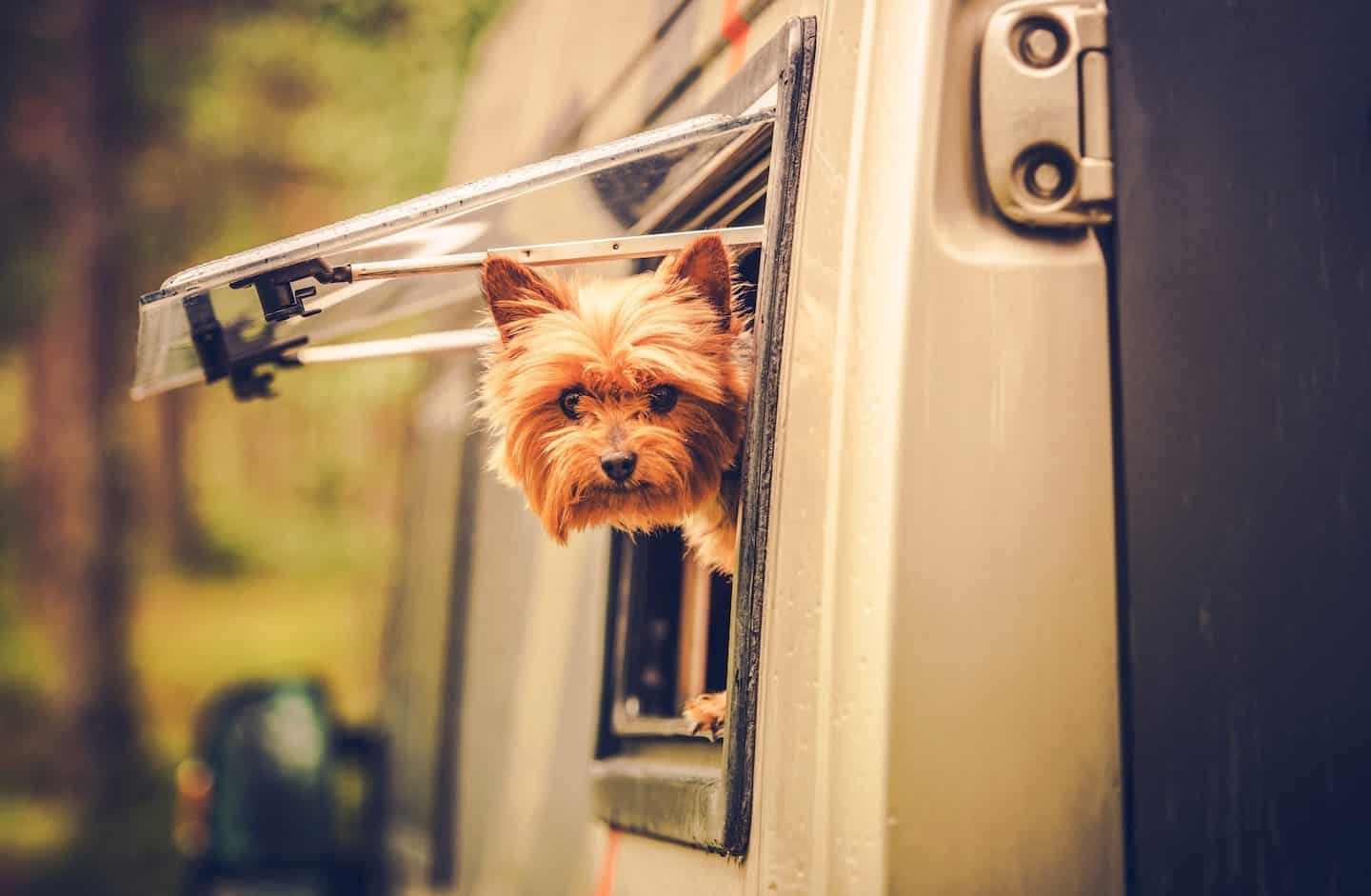 Dog-friendly Motorhome Hire | Traveling With Your Dog Made Easy