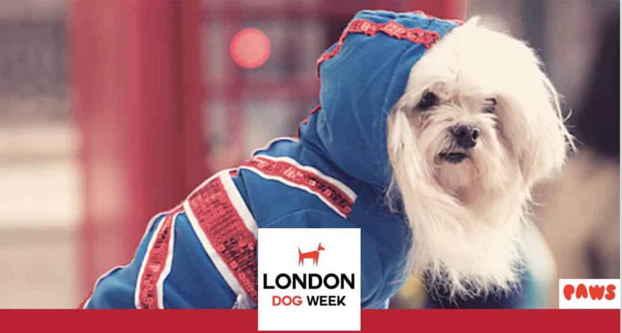 London-Dog-Week-Closing-Party-Lilliput 2