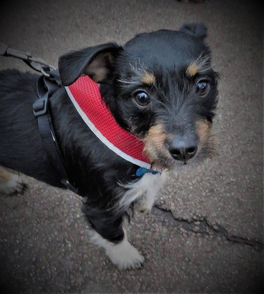 Newham Group Dog Walk February 2019
