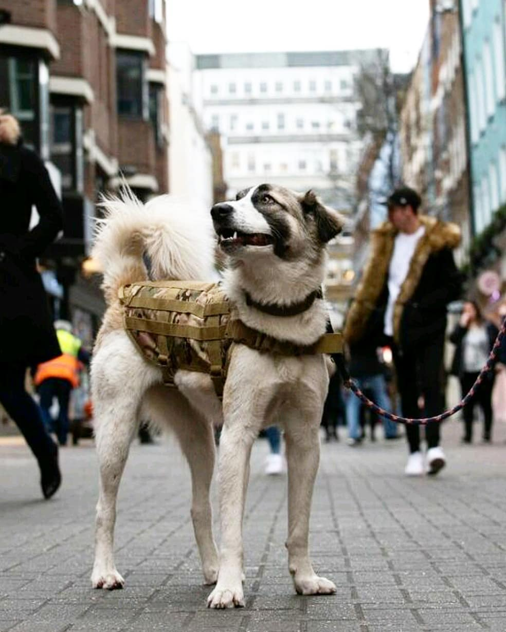 Not Your Average Dog Walk   Dog & Human Fitness Bootcamp