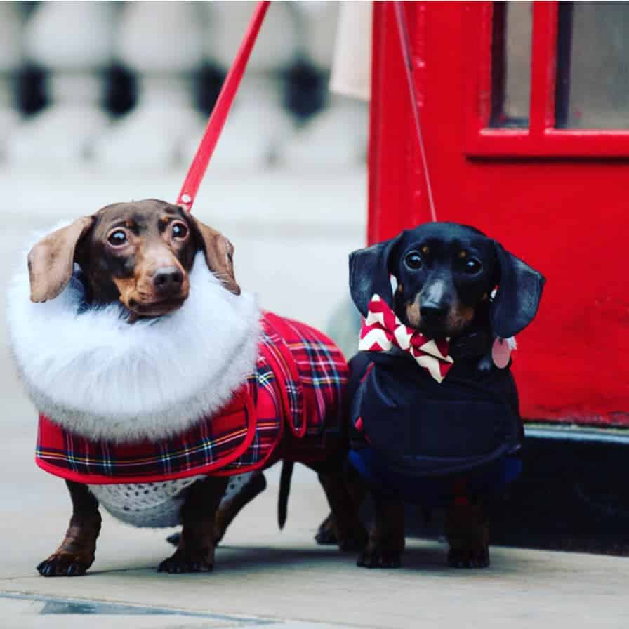 Pampered Pups and Pawrents Fur-Mamma's Day - London Dog Week 2019