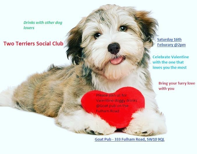 Valentines Doggy Drinks - Two Terriers Social Club