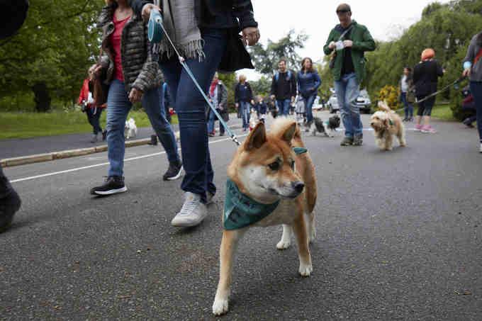 Woof Walkies Highgate 2019