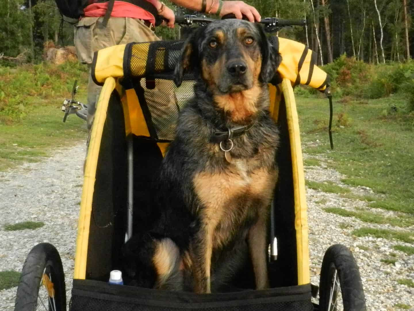 7 Dog-Friendly Things to Do In The New Forest - Cyclex Dog Bicycle Trailer
