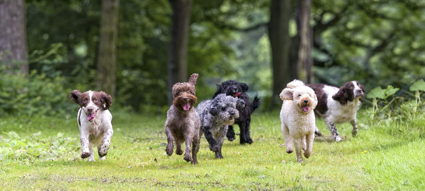 7 Dog-Friendly Things to Do In The New Forest - Dogstival Dogs in Forest