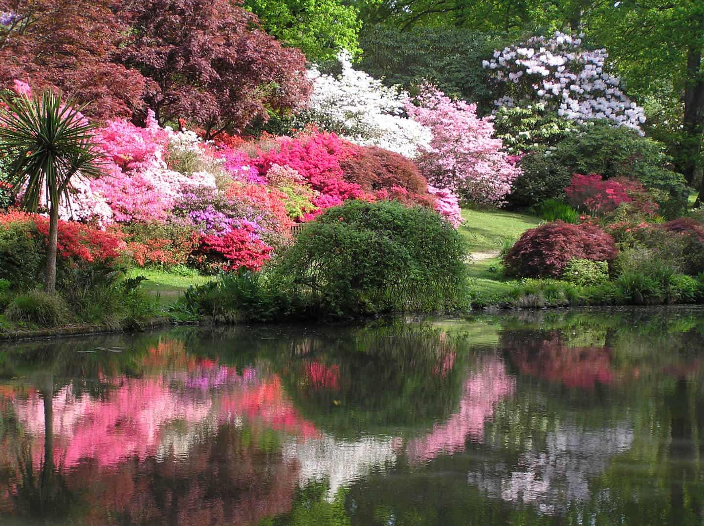 7 Dog-Friendly Things to Do In The New Forest - Exbury Azalea Bowl reflections in May