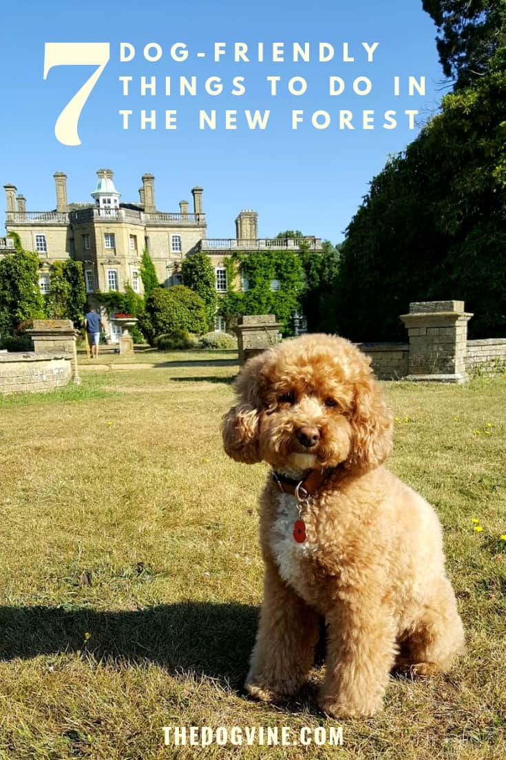 7 Dog-Friendly Things to Do In The New Forest Feature