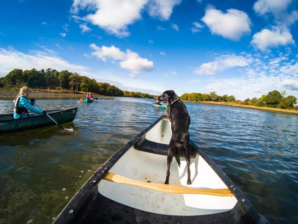 7 Dog-Friendly Things to Do In The New Forest - New Forest Activities Doggy Paddling