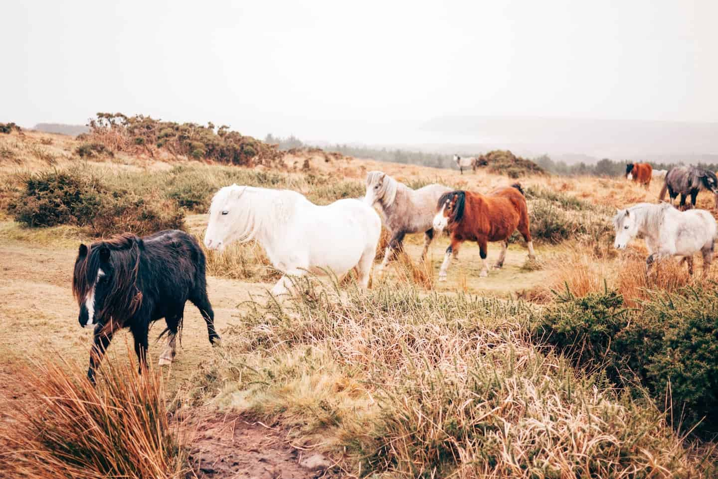 7 Dog-Friendly Things to Do In The New Forest - Wild Ponies