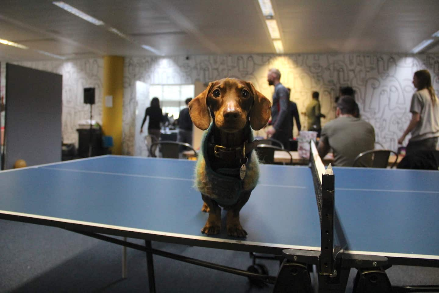 Are Dog-friendly Offices are good for you-Perkbox Dogs at Work-Bruno-London Dog Week