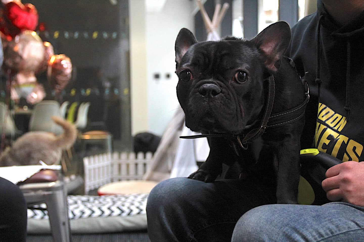 Are Dog-friendly Offices are good for you-Perkbox Dogs at Work-Ozzy-London Dog Week