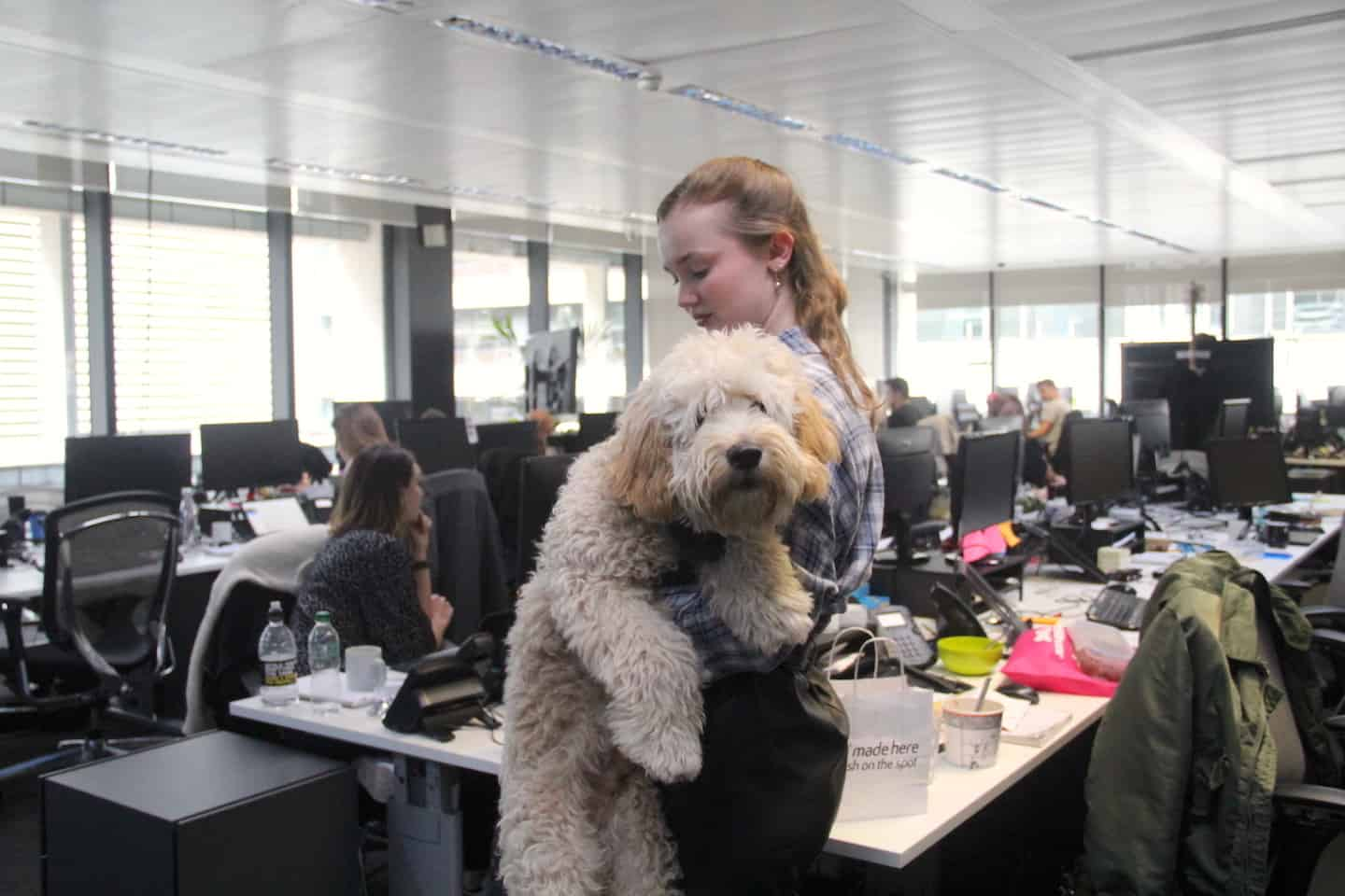 Are Dog-friendly Offices are good for you-Perkbox Dogs at Work-Reggie-London Dog Week