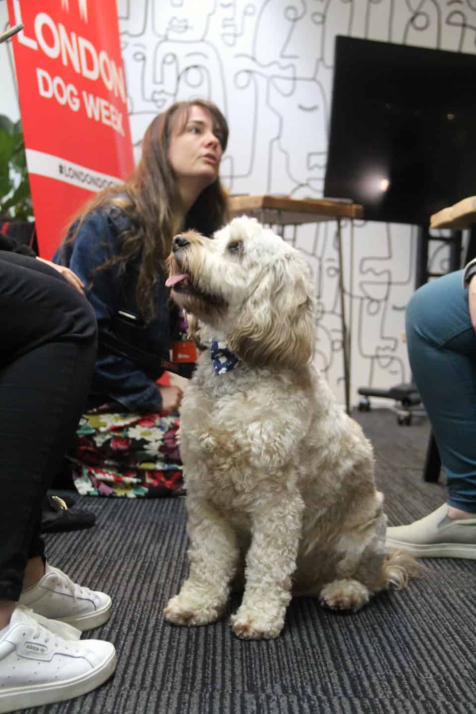 Are Dog-friendly Offices are good for you-Perkbox Dogs at Work-Reggie at London Dog Week