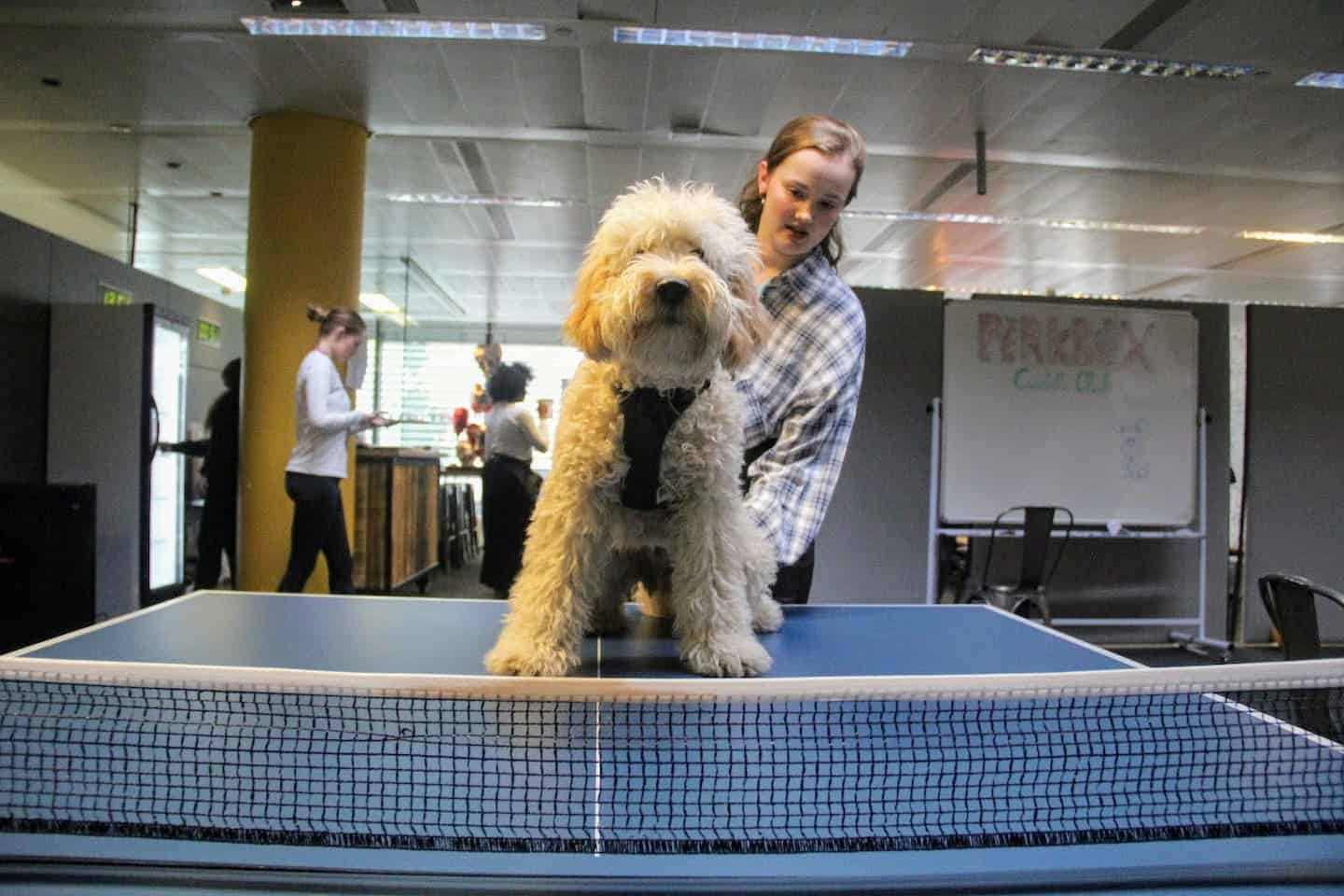 Are Dog-friendly Offices are good for you-Perkbox Dogs at Work-Reggie at the London Dog Week Cuddle Club