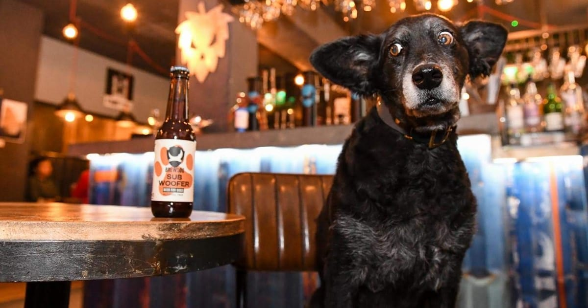 Brewdog's The Crafts The World's Beeriest Dog Show