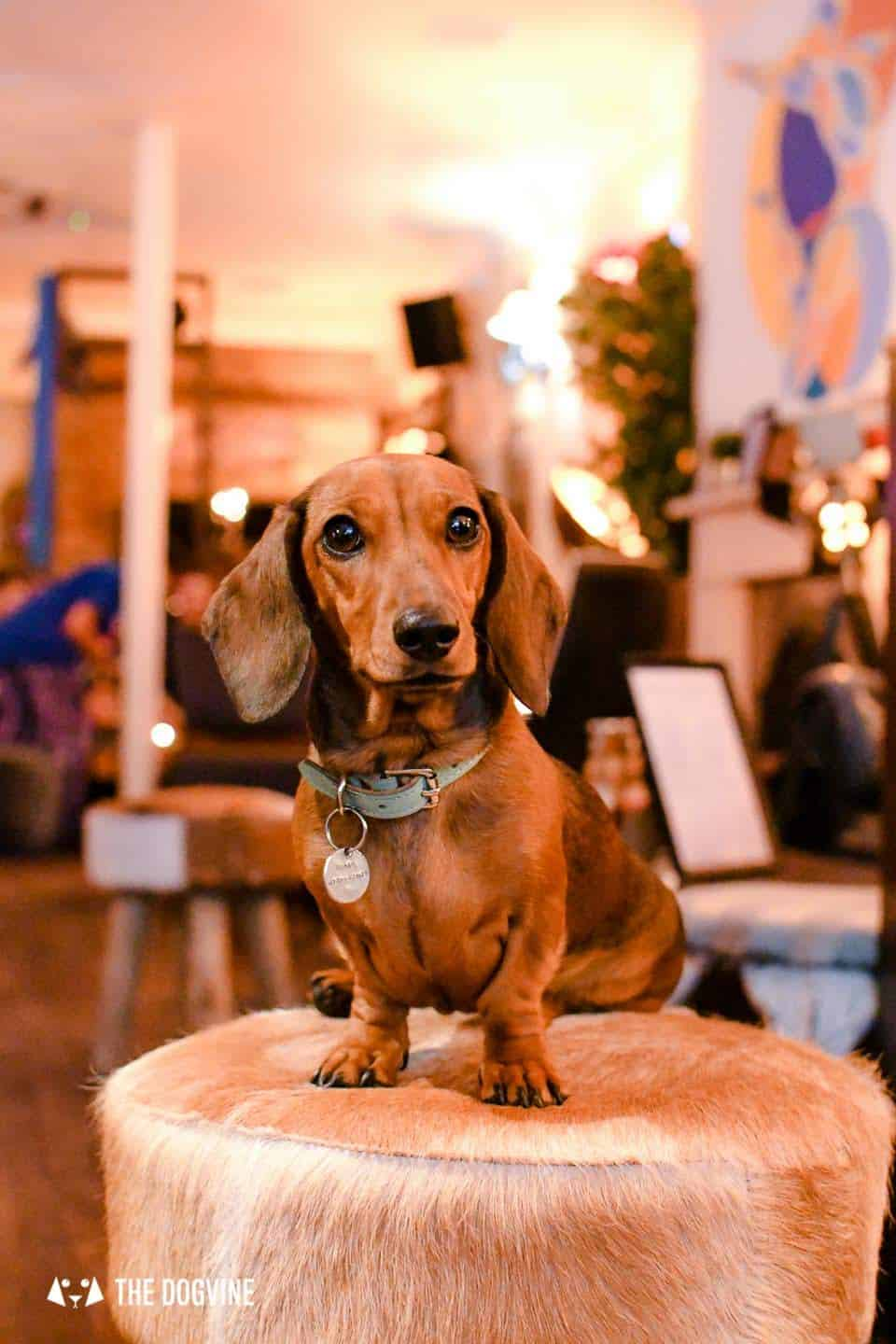 Dog Events In London This Month March 2019 - Empress Mathilda