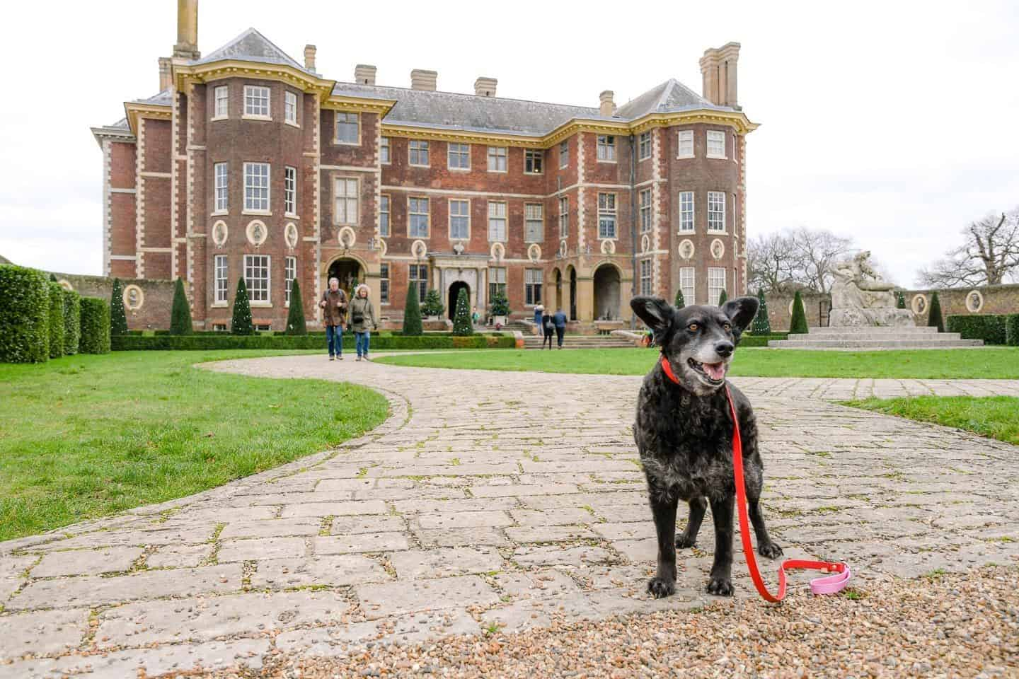 Dog-Friendly Ham House and Garden | A Dog's Day Out