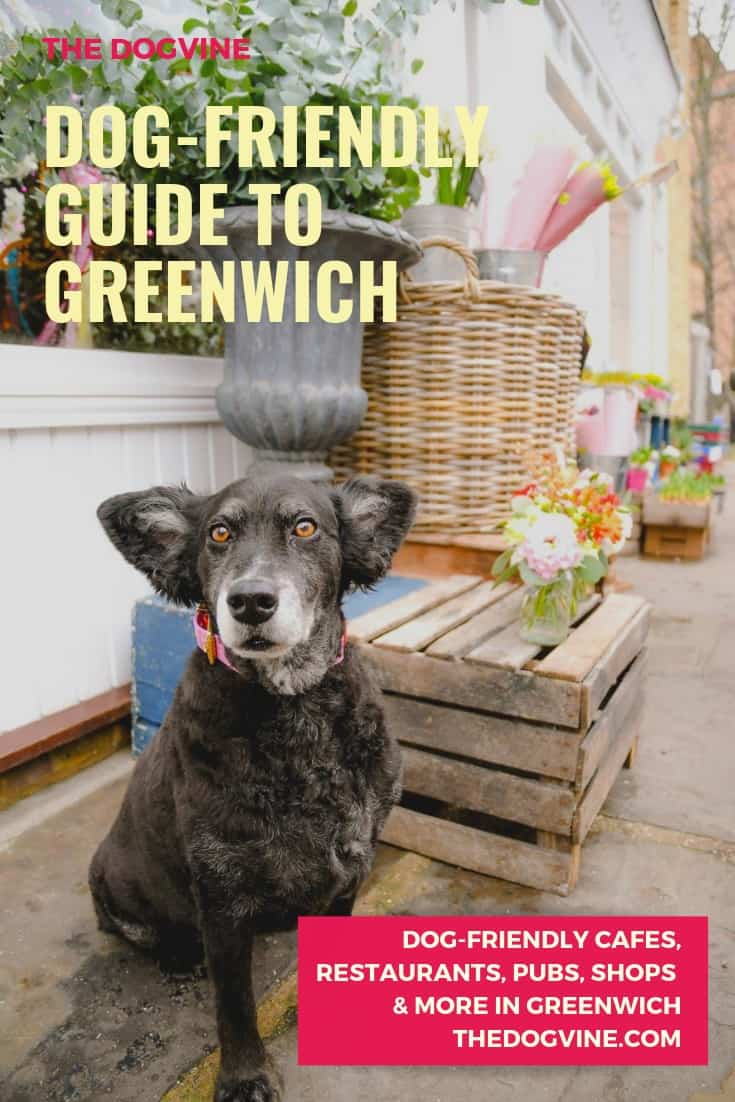 Dog-friendly Greenwich - Belinha at Royal Hill